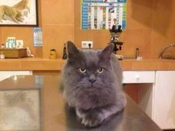 Ridick un gato sulfur,aunque aún no está durmiendo.
